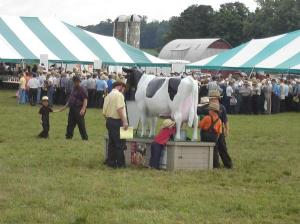 Kids milking the cow.